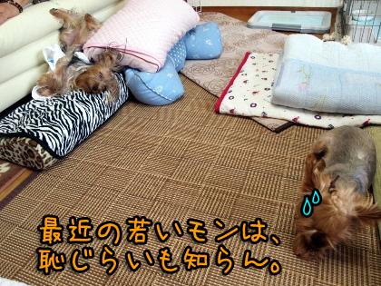 8_20090814172112.jpg