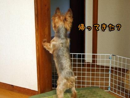 8_20090815192117.jpg