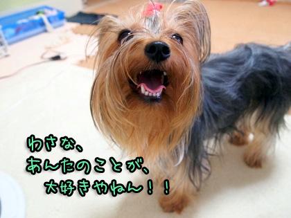 8_20090822194632.jpg