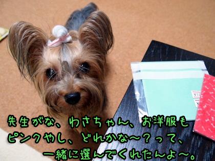 8_20090824201324.jpg