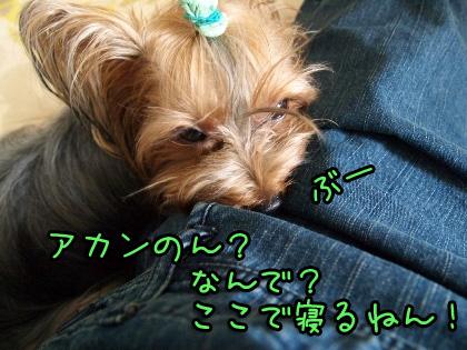 8_20090829170321.jpg