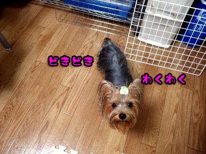 8_20090901192642.jpg