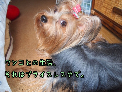 8_20090913135530.jpg
