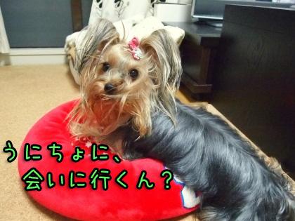8_20090918194648.jpg