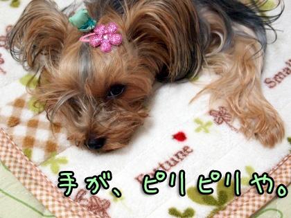 8_20091028192734.jpg