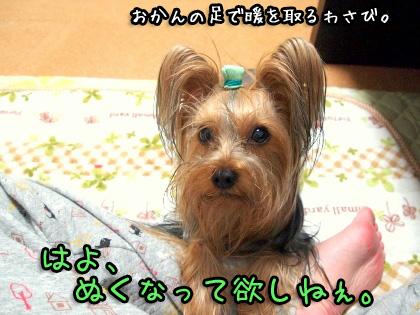 8_20091102181557.jpg