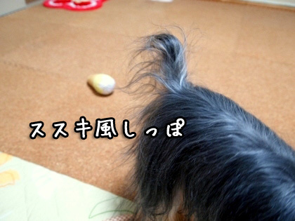 8_20091104125722.jpg