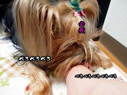 8_20091112190510.jpg
