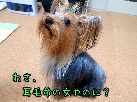 8_20091209190621.jpg