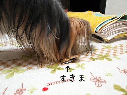 8_20091215181826.jpg