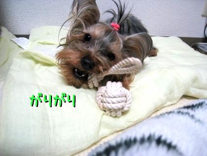 9_20090122201156.jpg