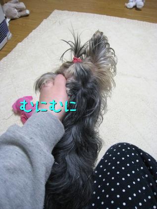 9_20090131194850.jpg