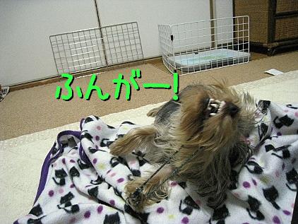 9_20090227204419.jpg