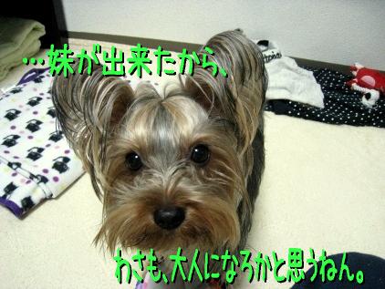 9_20090307212414.jpg