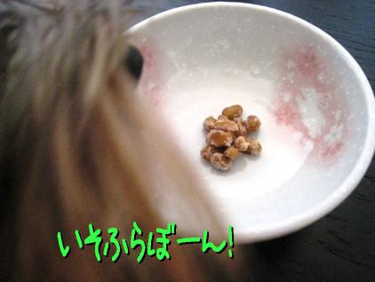 9_20090315155027.jpg