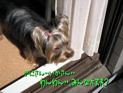9_20090318155602.jpg
