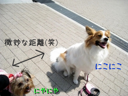9_20090408154721.jpg