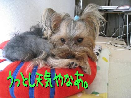 9_20090425195338.jpg