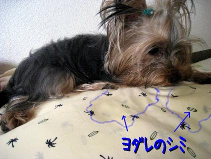 9_20090511160138.jpg