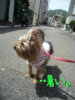 9_20090515190033.jpg
