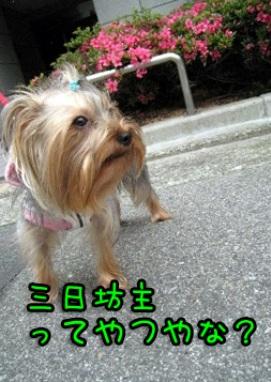 9_20090529183031.jpg