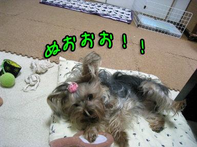 9_20090603150236.jpg