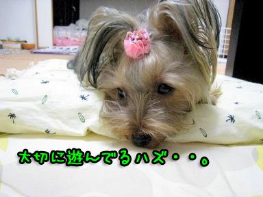 9_20090604185659.jpg