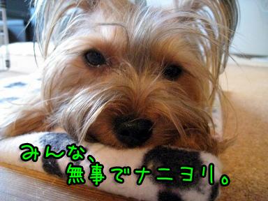 9_20090605202249.jpg