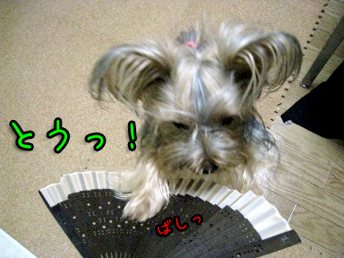 9_20090608191848.jpg