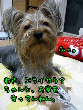 9_20090615185037.jpg