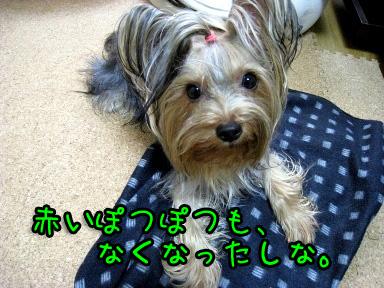 9_20090619192534.jpg