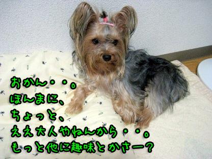 9_20090713191749.jpg
