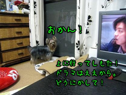 9_20090718205832.jpg