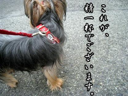 9_20090726125742.jpg