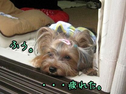 9_20090808180321.jpg