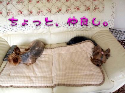 9_20090813183439.jpg