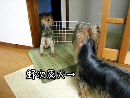 9_20090815192117.jpg