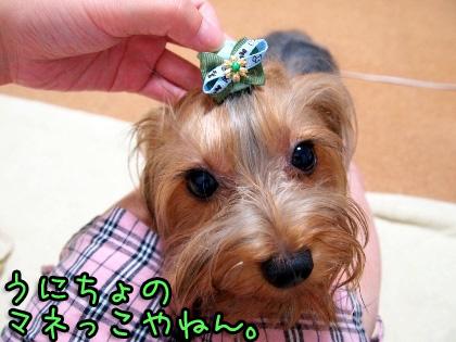 9_20090905202146.jpg