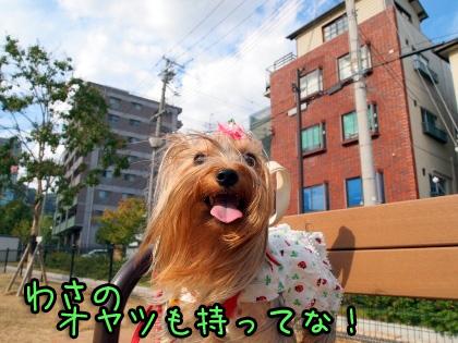 9_20090910172949.jpg