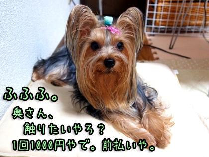 9_20091002202037.jpg