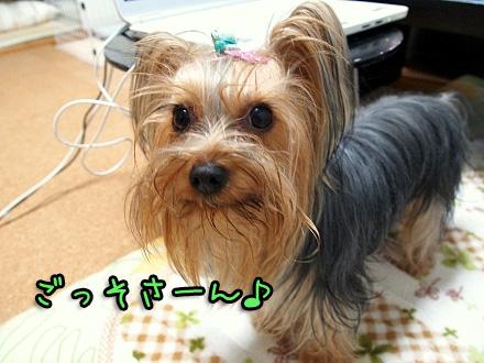 9_20091112190505.jpg