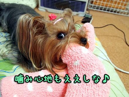 9_20091126200652.jpg