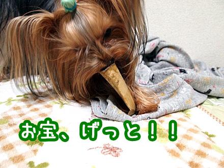 9_20091215181826.jpg