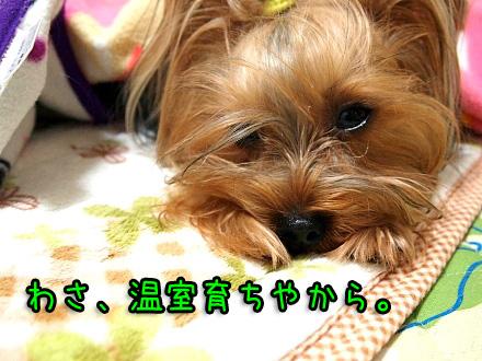 9_20091221194549.jpg