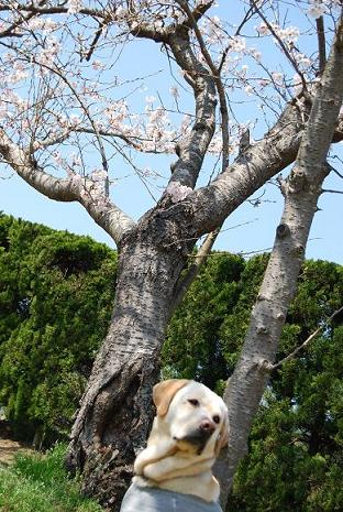 happyundersakuratree.jpg