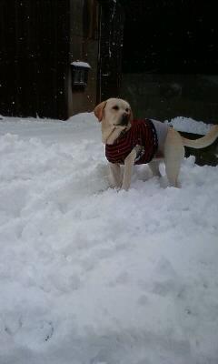 happy with snow