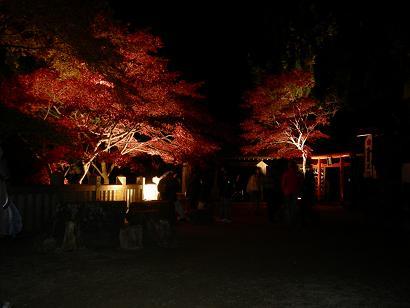 暗闇に浮かび上がる紅葉