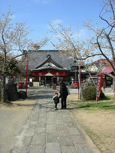 大聖寺と桜