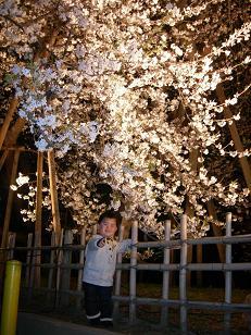 枝垂れ桜ライトアップ!