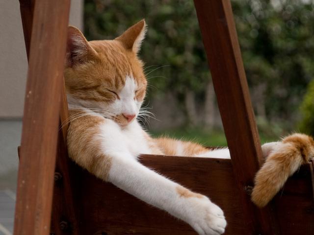 カッコいい寝方の猫